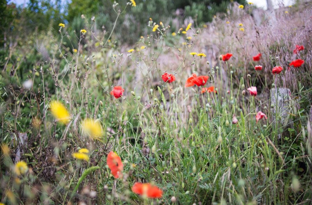 Meadow Habitats and Biodiversity