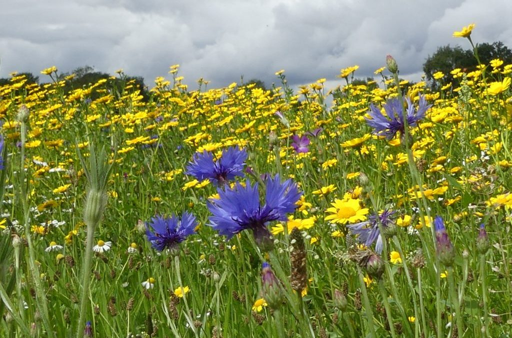 Inside Your Wildflower Meadow