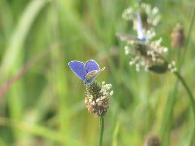 Wildlife butterflies